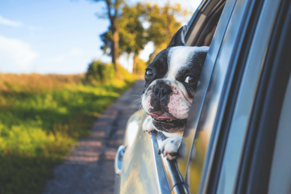 Tips for Holiday Traveling With Pets