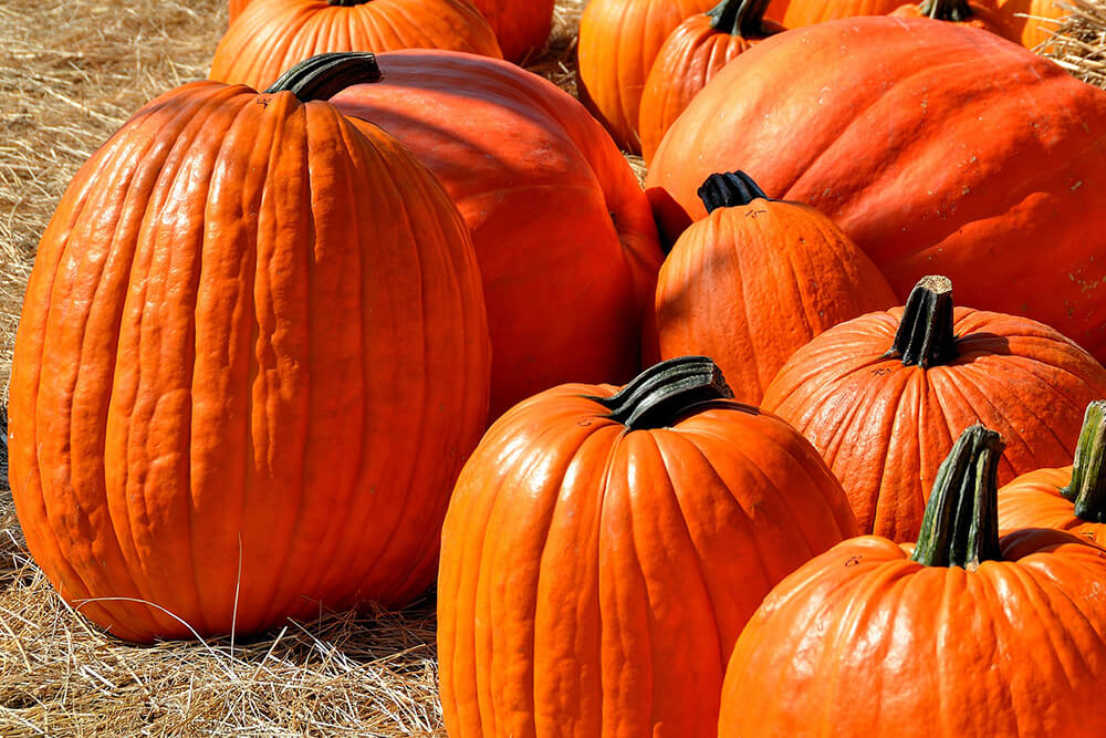 The Best Fall Festivals in Ohio